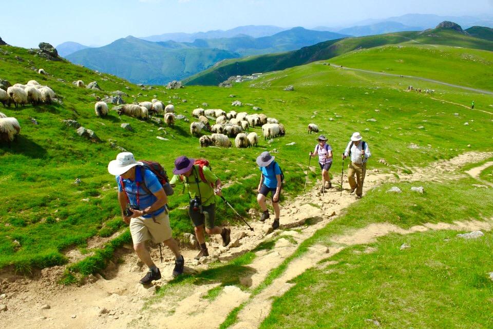 Image result for Camino de Santiago