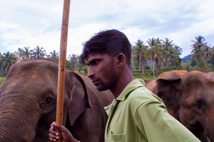 Sri Lankan man with Elephants