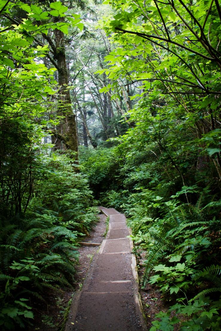 Olympic Naitonal Park Trail.jpg