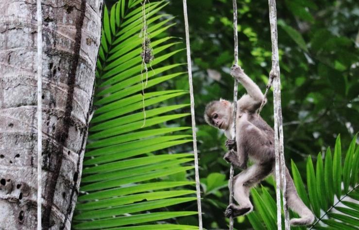 IMG_3919 - monkey (1024x659)